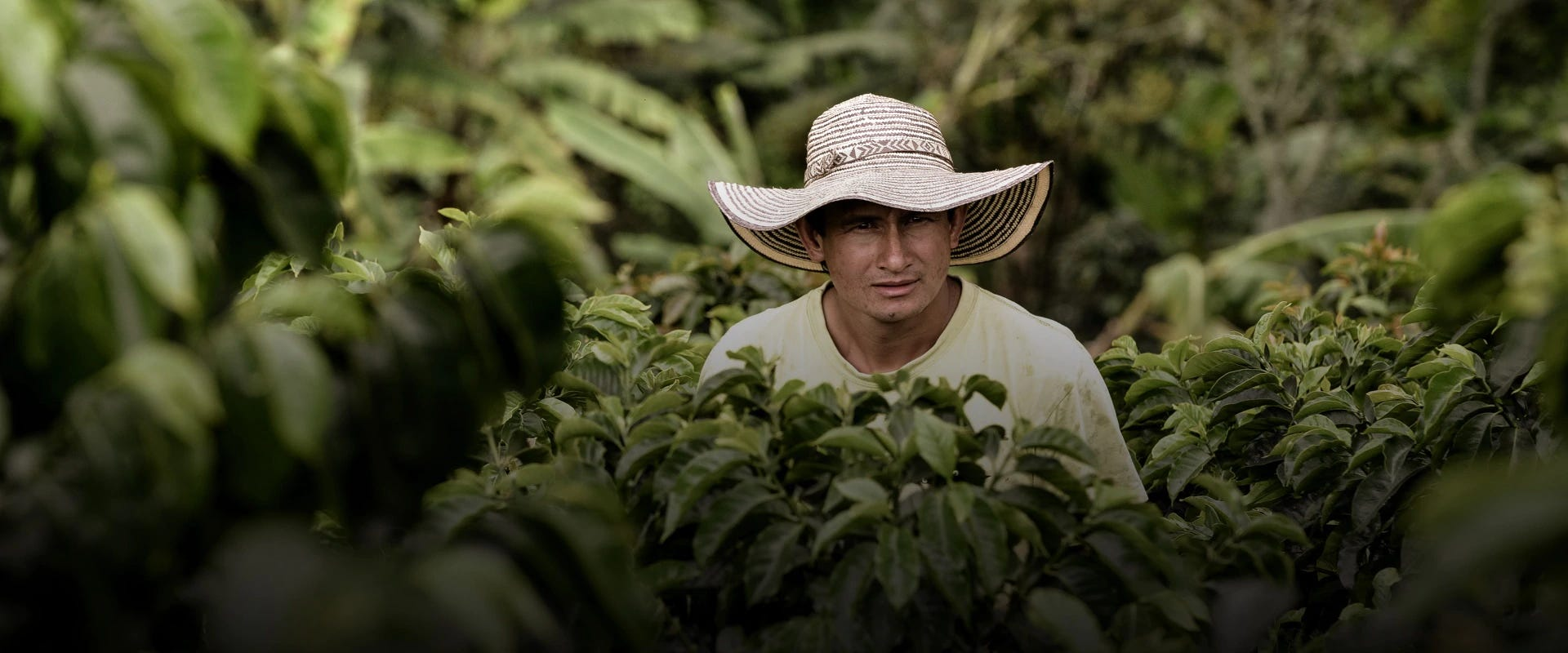 Sustainable coffee production